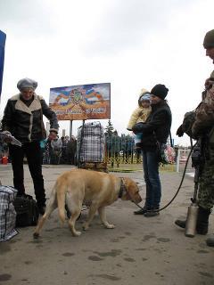 Тука: «За два тижні пішохідним переходом у Станиці Луганській скористалося близько 20 000 осіб»
