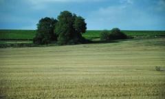 Будет ли гармонизировано украинское агрострахование с европейским?