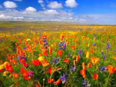 Підтримайте першу обласну акцію «Квітуча Луганщина»!