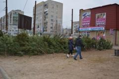 В Северодонецке новогодние ели продают от 70 грн.