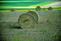 Татьяна Бривко: На агростраховом рынке пора наводить порядок