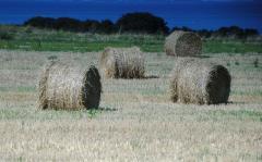 Аграрные расписки при помощи IFC активно приживаются в Украине