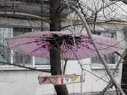 Вихованці екологічного Центру закликають до підгодівлі птахів