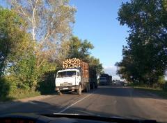 Хто і навіщо вирубує ліси Луганщини