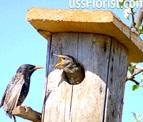 Міжнародний день птахів