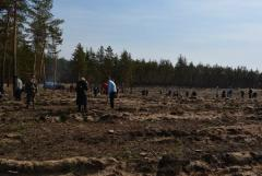 На Донбассе начинают восстанавливать леса после боевых действий