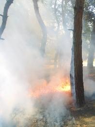 Рятувальники ліквідували пожежу на Гвардійському