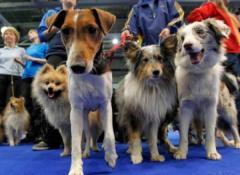 В Северодонецке покажут лучших собак Украины