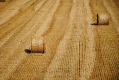 Земельный мораторий можно отменять поэтапно, – Павел Кулинич