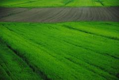 Спрос на аграрные расписки растет