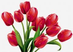 Святкова концертна програма «Весняний мікс»