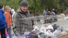 В Северодонецке прошла выставка голубей