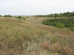 Створено нову природно-заповідну територію загальнодержавного значення