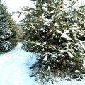 zimnie_krasavicy.jpg