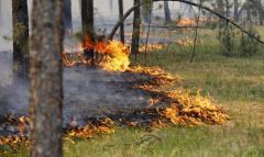 Основною причиною загорянь лісу є сільськогосподарські випали та обстріли, - ЛОУЛМГ