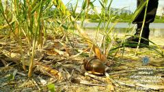 В Северодонецке на берегу озера нашли гранату