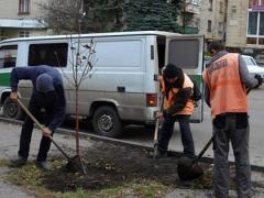 На улицах Лисичанска высадят сотню новых деревьев