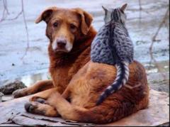 Лисичане собирают подписи за создание приюта для животных