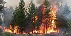 Лісова пожежа в Станично-Луганському районі
