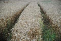 IFC и Аграрный страховой пул обсудили возможность дальнейшего сотрудничества